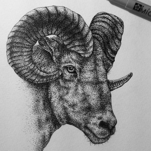 Goat (hand drawing)
