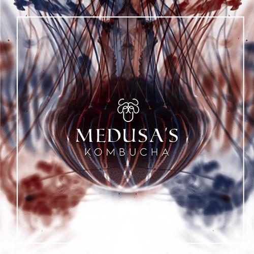 Medusas Kombucha