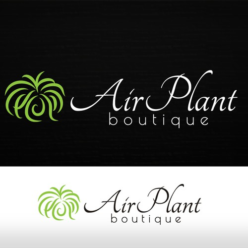Air Plant Boutique