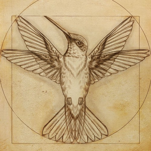 Da vinci hummingbird Illustration