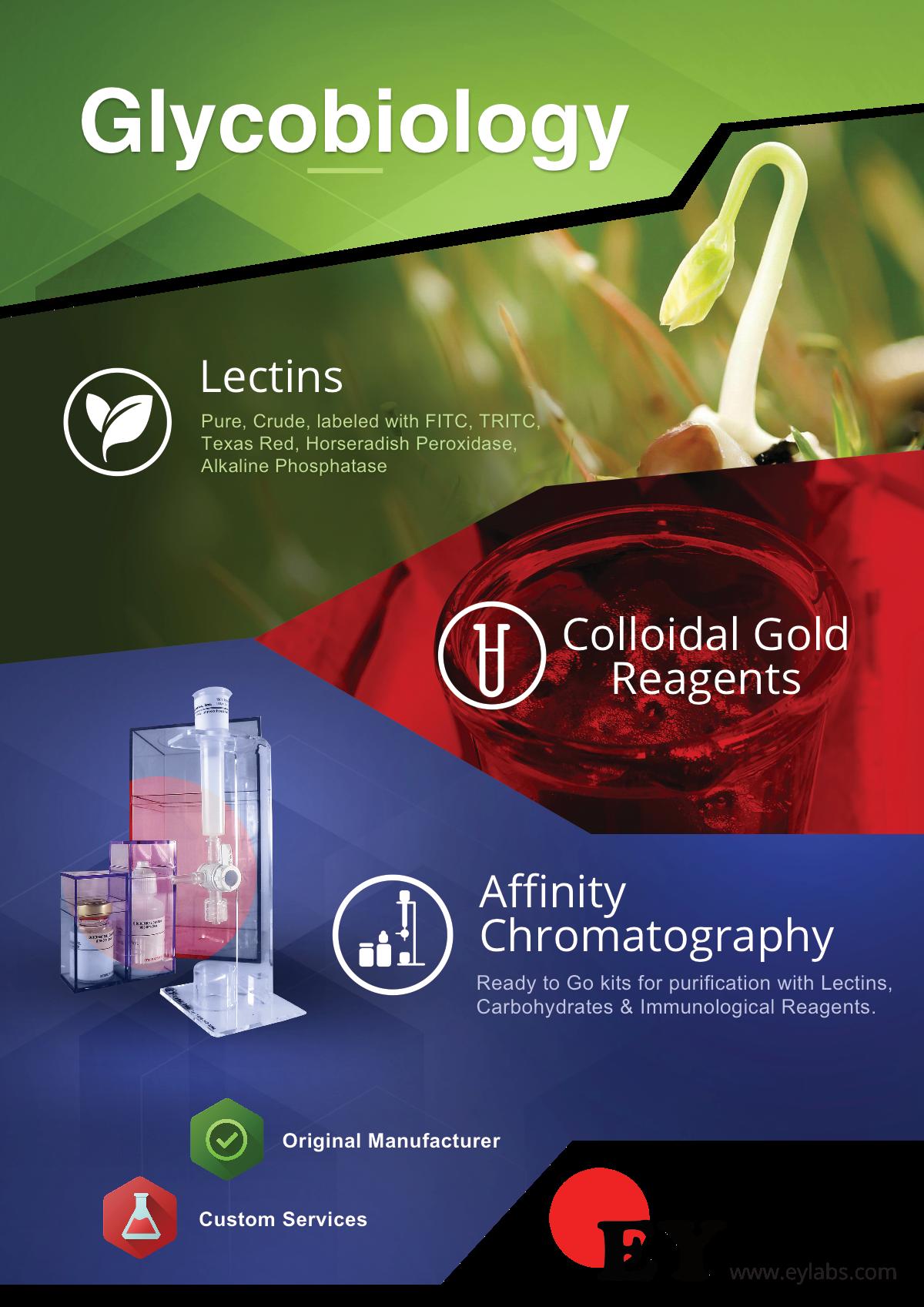 Glycobiology Print Flyer A4 Size