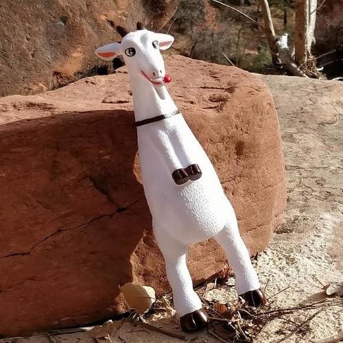 Squeaky goat toy