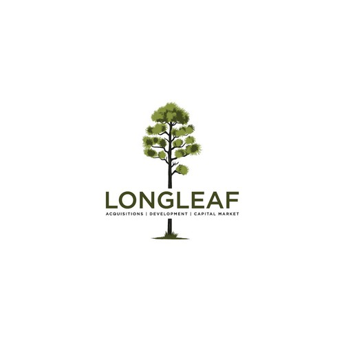 LONG LEAF PINE TREE FOR REAL ESTATE COMPANIES