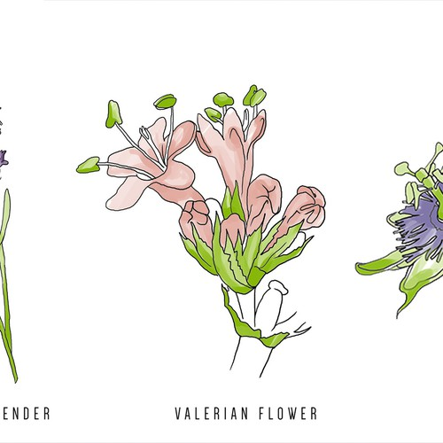 Plants illustrations