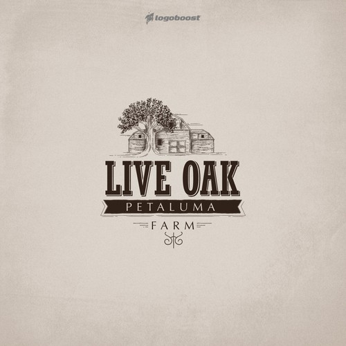 Live oak logo design