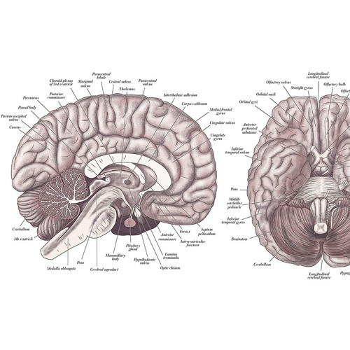 Vintage brain diagram poster