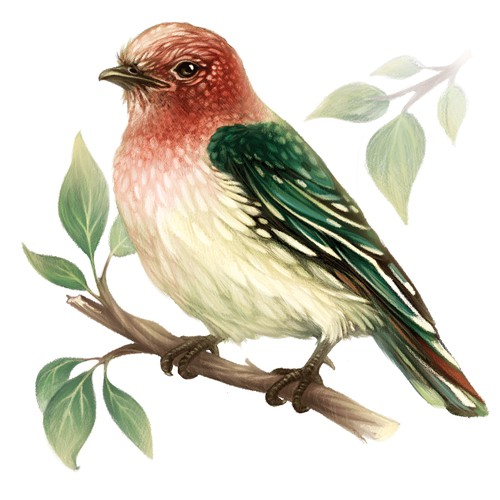 Bird illustration for a wall clock