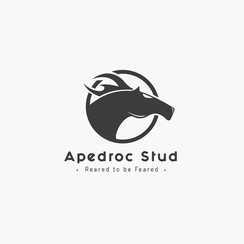 Apedroc Stud