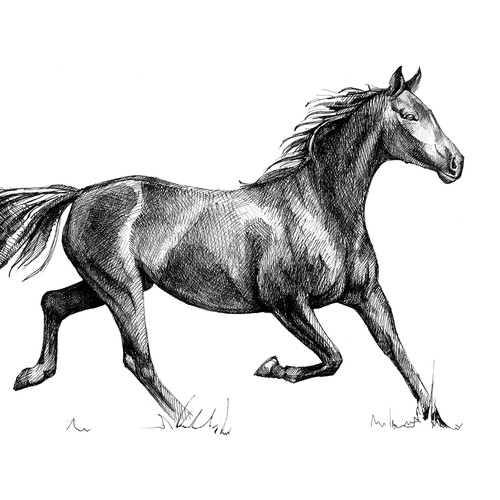 Horse. Hand drawn sketch