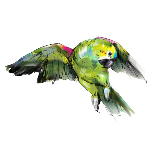 Boyfriend needs to wow girlfriend with stunning artists rendering of her Amazon Parrot.