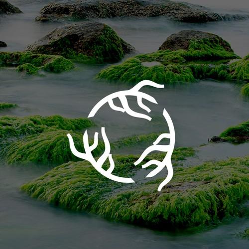 Seaweed Bioplastic
