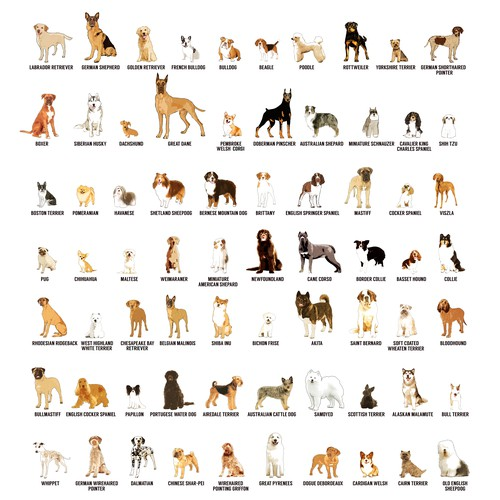 100 of the most popular dog breeds