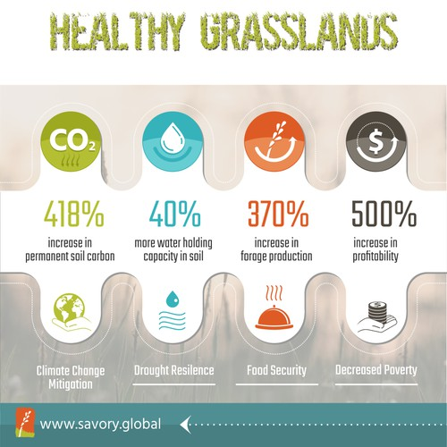 Savory Global Infographic