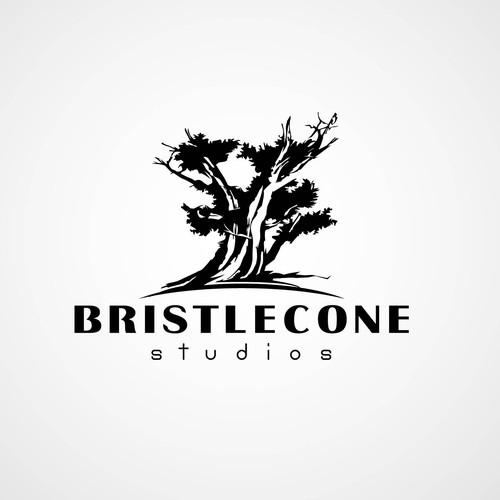 Logo concept for Bristlecone Studios