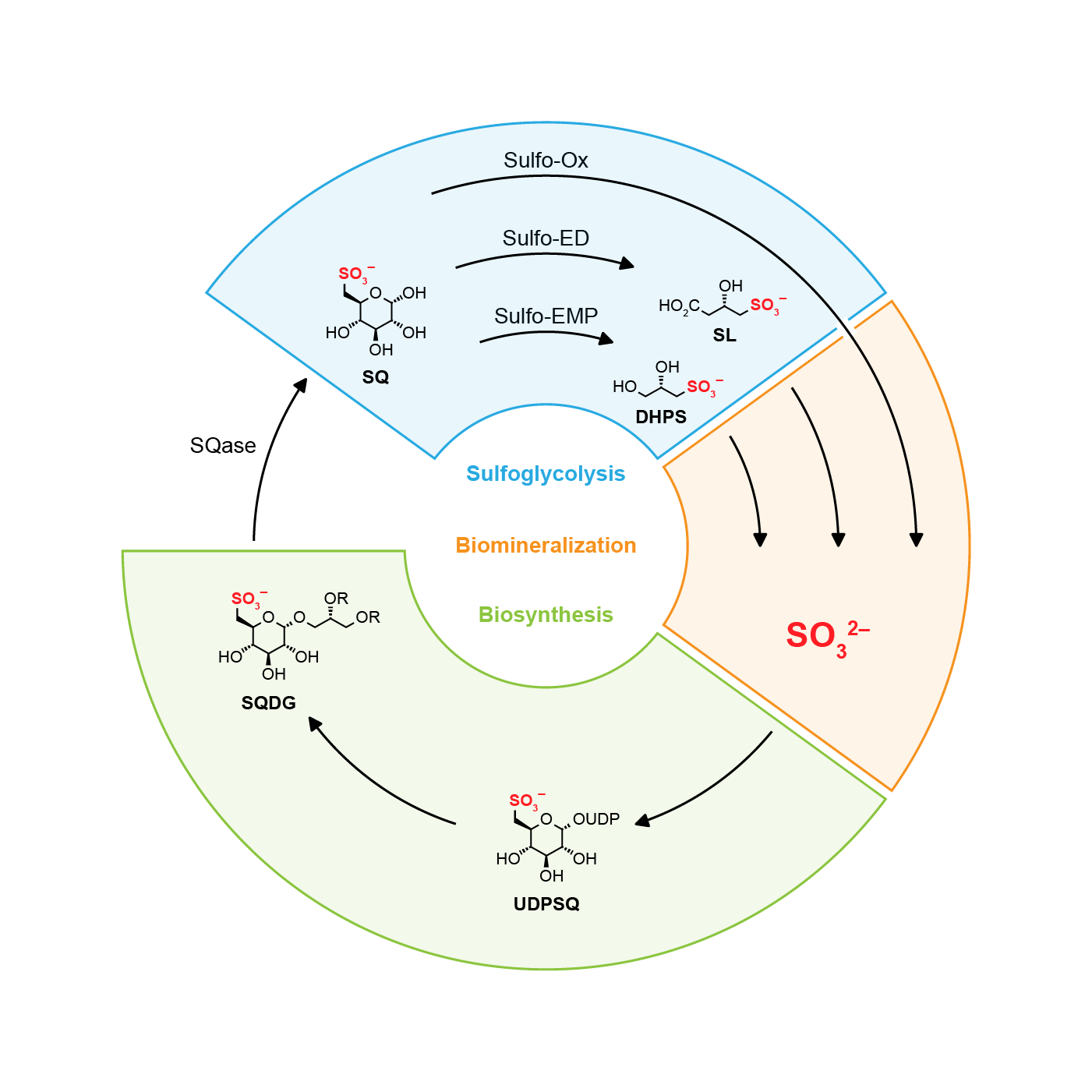 Metabolism scheme for a grant application