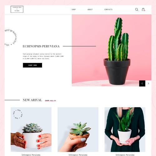Clean concept for cactus shop
