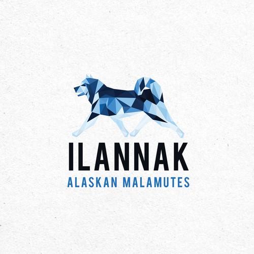 Ilannak Alaskan Malamutes