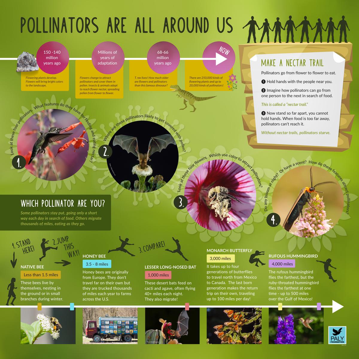 Pollinators - Paly Foundation Exhibit