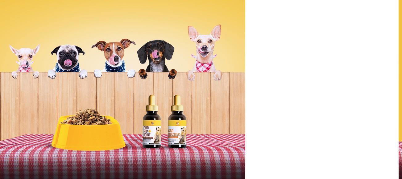 FUN! Banner image needed for Online Pet Food Subscription Box