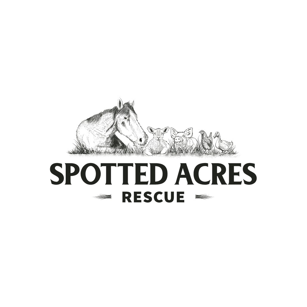 Help Spotted Acres Farm get noticed with a classy logo!