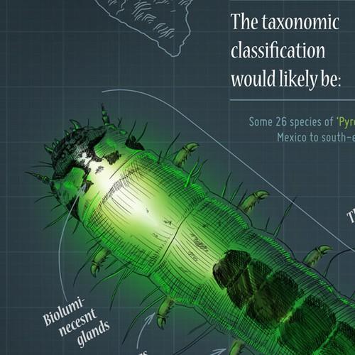 Predatory Glow Worm Infographic